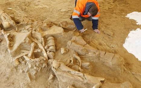 'Helmut' the mammoth found near Paris | Teaching history and archaeology to kids | Scoop.it