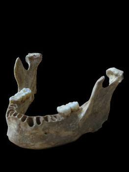 Neanderthal-Human Hybrid Unearthed | The Scientist Magazine® | Soul & Spirituality | Scoop.it