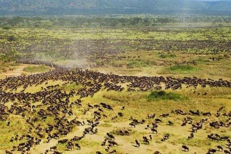 Serengeti Highway Compromise Proposed by Famed Scientist | johnson geo 152 | Scoop.it
