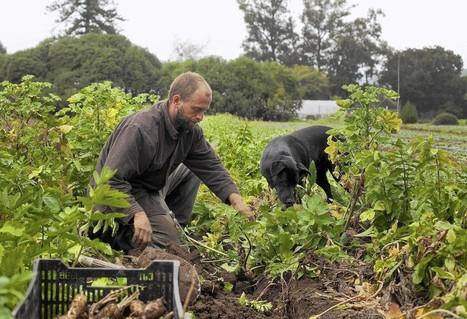 Organic agriculture attracts a new generation of farmers | Sustainable Food Systems | Scoop.it