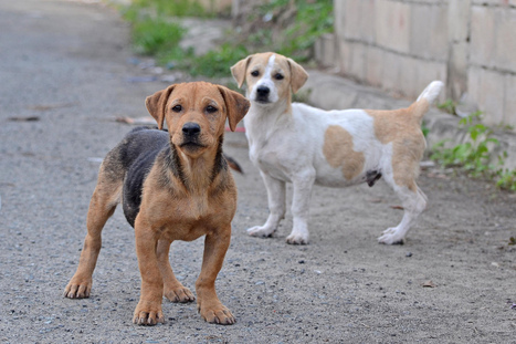 7 Amazing Street Dog Rescue Groups - One Green Planet | Animals R Us | Scoop.it