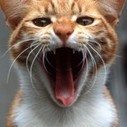13 Sounds A Cat Makes | Cat Care And Fun | Scoop.it