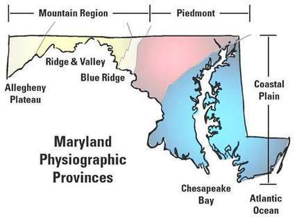 MD Native Plants: Plant Lists for MD Regions | 5th Grade Maryland Flower Research | Scoop.it