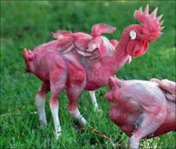 L'effrayante vérité sur le «poulet» servi au KFC | Santé | Scoop.it