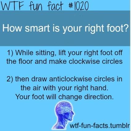 WTF-fun-facts : funny & weird facts   Pskologi kurs 2   Scoop.it