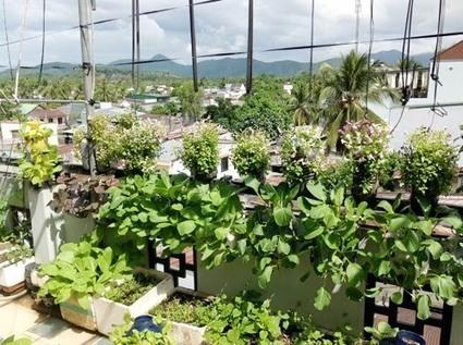 Cùng ngắm vườn rau xanh tại Đồng Nai ,món ăn ngon | tin tức tổng hợp 24h | Scoop.it