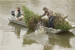 Donated Christmas trees gain new life as fish habitat « Arkansas ... | Fish Habitat | Scoop.it