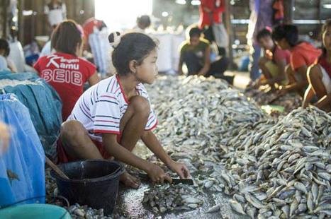 WWF lanza un código ético para luchar contra la explotación humana en las pesquerías en países | Esclavitud infantil | Scoop.it