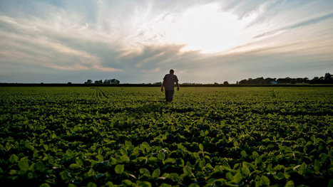 Invader Batters Rural America, Shrugging Off Herbicides | Sustainable Futures | Scoop.it