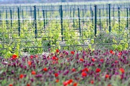 Le Languedoc-Roussillon la région où l'on arrose les vignes - L'indépendant.fr | Le vin quotidien | Scoop.it