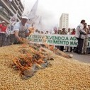 GM Crops Bring Brazil Lower Yields and Higher Chemical Use | Questions de développement ... | Scoop.it