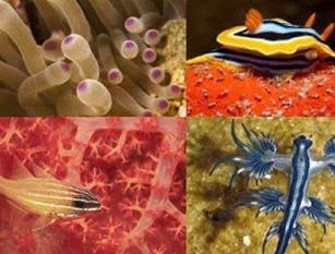 Journée internationale de la diversité biologique, 22 mai   Bee'O Press   Scoop.it