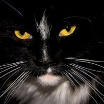 BBSRC funded: Cats Have Super, Psychedelic Vision | BIOSCIENCE NEWS | Scoop.it