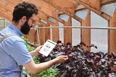 Grow Your Own Fresh Food in the Middle of Manhattan | Aquaponics in Action | Scoop.it
