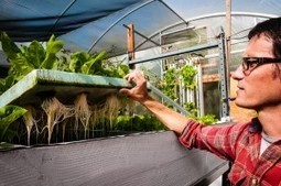 UNTROUBLED WATERS: URBAN FARMING STAYS AFLOAT AT EVO FARM IN MAR VISTA | Evo Farm | Vertical Farm - Food Factory | Scoop.it