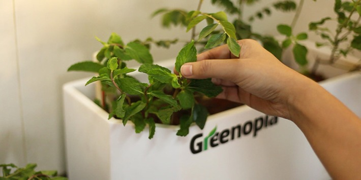 Greenopia makes gardening a 'remote' affair | Garden apps for mobile devices | Scoop.it