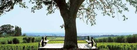 10 Things Every #Wine Lover Should Know About Ornellaia | Vitabella Wine Daily Gossip | Scoop.it