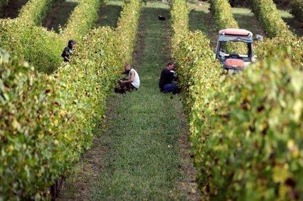 Quatre amis qui font sortir le vin ariégeois de l'oubli | Vin et agroécologie | Scoop.it