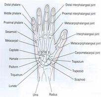 Know About Distal Radius Fractures and Scaphoid Fractures   Health & Wellness   Scoop.it