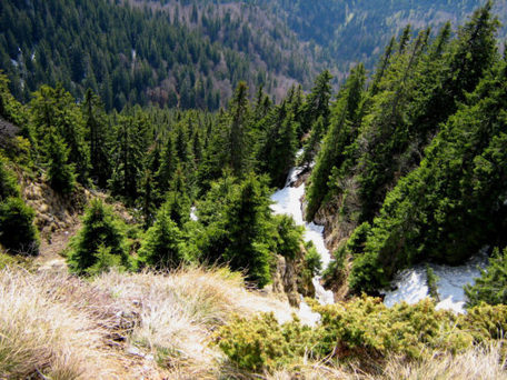 Romania races to save some of the last untouched forests in Europe | Biodiversity protection | Scoop.it