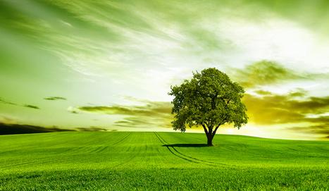 L'arbre qui crée de l'énergie | New World Energie | Scoop.it