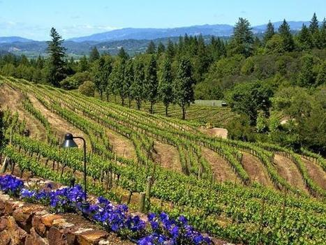 Sonoma County - Where Are the Best Tasting Rooms?   Healdsburg, California Lifestyle   Scoop.it