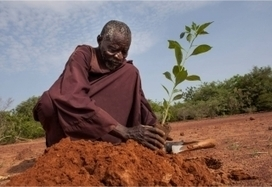 NEPAD launches 2nd Call for Proposals for its Climate Change Fund   NEPAD   NEPAD CAADP: Agriculture, Food Security and Nutrition in Africa   Scoop.it