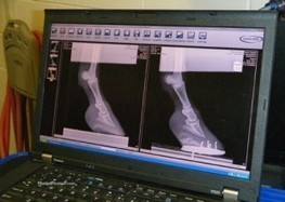 Dusty Visits the Rood and Riddle Podiatry Center | Dressage Daily | Hoofcare and Lameness | Scoop.it