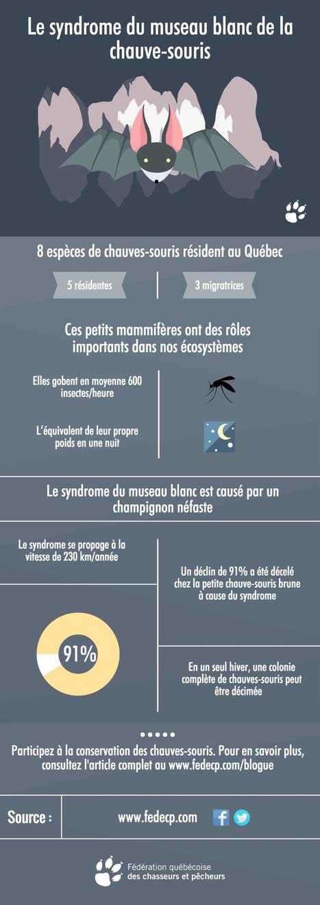 Le syndrome du museau blanc de la chauve-souris | Community Management | Scoop.it