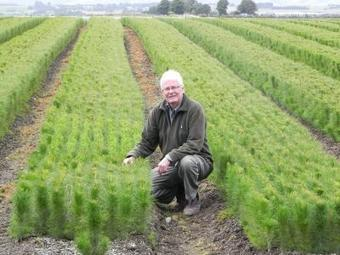 Pine seedlings destroyed as ETS price plummets - Otago Daily Times | Carbon Farming | Scoop.it