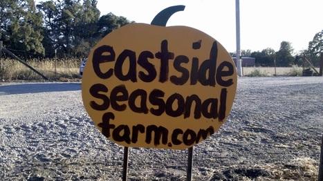 Eastside Seasonal Farm is open for business! | EastSide Seasonal Farm & Pumpkin Patch | Scoop.it