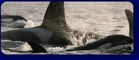 Ocean Sounds - Pictures & Sounds | DESARTSONNANTS - CRÉATION SONORE ET ENVIRONNEMENT - ENVIRONMENTAL SOUND ART - PAYSAGES ET ECOLOGIE SONORE | Scoop.it