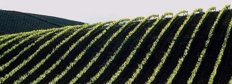Une alternative à l'agriculture conventionnelle: la montée de l'agroécologie | Questions de développement ... | Scoop.it