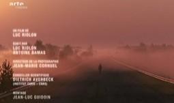 Tchernobyl, c'est le paradis (des bêtes) | Catastrophes | La Ville et l'Histoire | Scoop.it