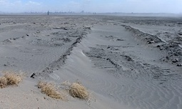 Land degradation costs the world up to $10.6tn a year, report says   Food issues   Scoop.it