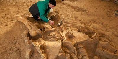 Un squelette de mammouth en parfait état découvert en région parisienne | Digital current | Scoop.it