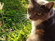 Bronquitis felina | publicaciones veterinarias | Scoop.it