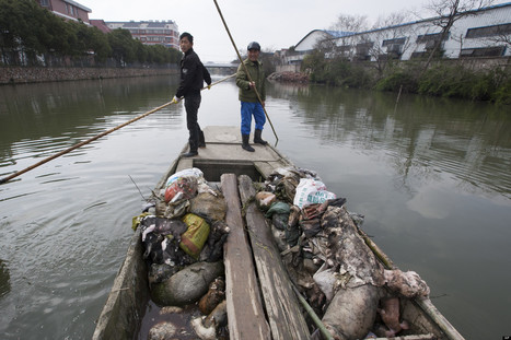 Dead Pig Count In China's Waters Near Shanghai Spikes (GRAPHIC PHOTOS) - Huffington Post | Underwater Photography | Scoop.it
