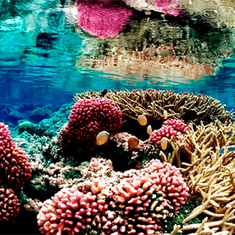 More Acid Oceans of the Future Mimic Impacts of Extinction: Scientific American | preservemarinelife | Scoop.it
