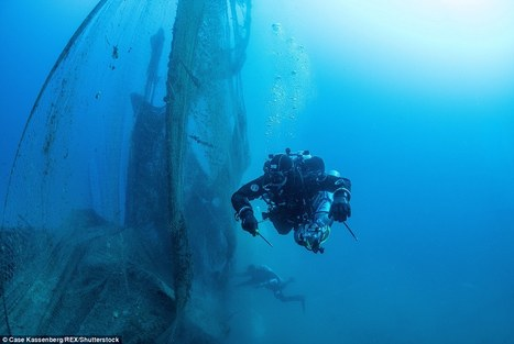 The scourge of 'ghost fishing': Divers plunge to depths of over 100ft to clear up abandoned nets and traps that kill sea lifehttp://ht.ly/Jidk3009a8N | Biodiversity protection | Scoop.it