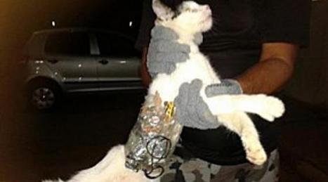 VIDEO : Un chat contrebandier arrêté dans une prison brésilienne   Les chats c'est pas que des connards   Scoop.it