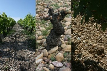 """Jefford on Monday: The Party's Over...  on """"minerality""""... 