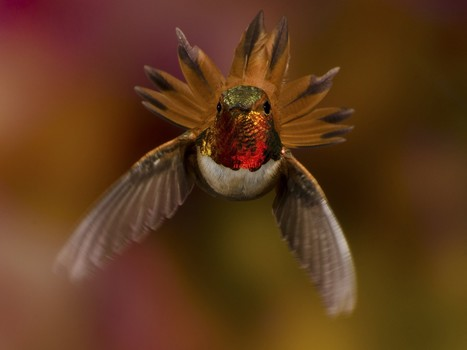 The most incredible nature photography of 2013   enjoy yourself   Scoop.it
