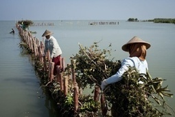 Coastal Water management: Coast Indonesia protected by 'building with nature' | Farming, Forests, Water, Fishing and Environment | Scoop.it