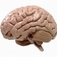 'Stille beroerte vergroot kans op ziekte van Parkinson' - Healthylives | gezonde levenssltijl = gezondevoeding | Scoop.it