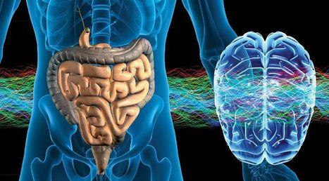 Il microbiota intestinale mantiene sana la mente con l'aiuto del sistema immunitario | Il mio amico pediatra | Scoop.it