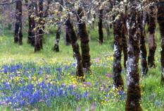 NCC – Land Lines: Citizenship and biodiversity conservation | GarryRogers Biosphere News | Scoop.it