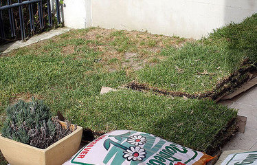 How to a Patch a Dead Section of Lawn - For Dummies | News You Can Use - NO PINKSLIME | Scoop.it