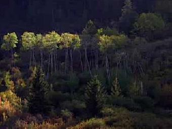 Assignment Discovery: Temperate Forest : HowStuffWorks | Temperate Forest | Scoop.it