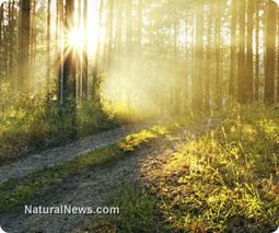 Nature's healing gold - berberine [grape root]